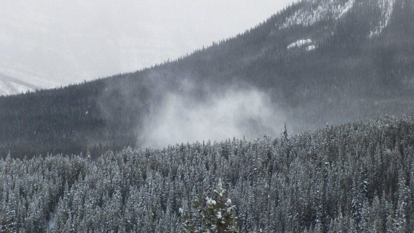 snow blowing off trees at banff national park 2