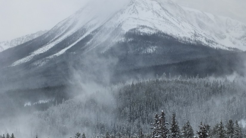 snow blowing off trees at banff national park