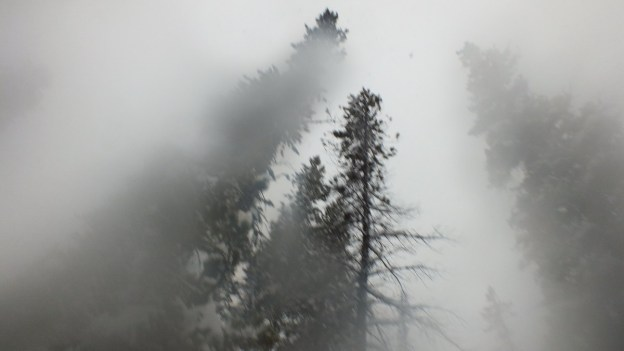 trees under snowstorm on pipestone trail - banff national park