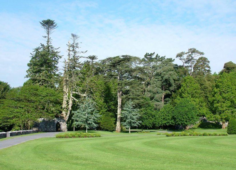 forest beside ashford castle lawn