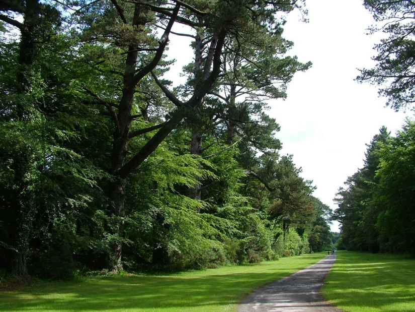 laneway through forest at ashford castle - ireland