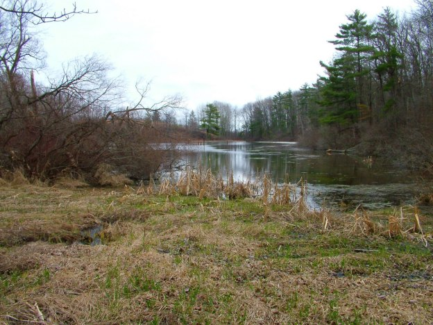 pond_dickson Conservation area_ontario