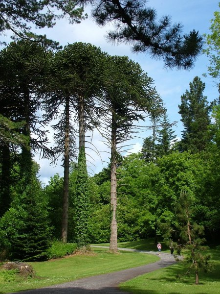 tall trees at ashford castle - ireland