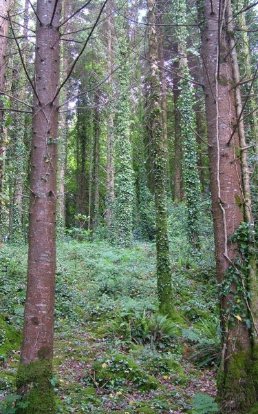 trail through forest at ashford castle 2