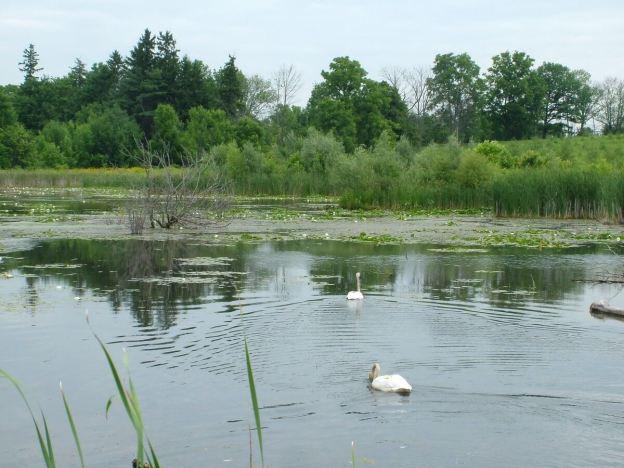 lower reesor pond - toronto 7