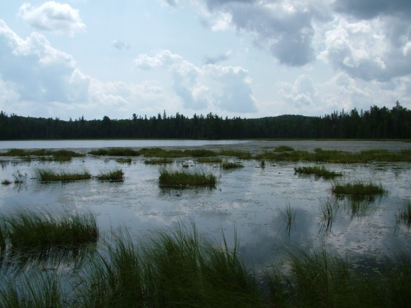 march hare lake - algonquin park - ontario