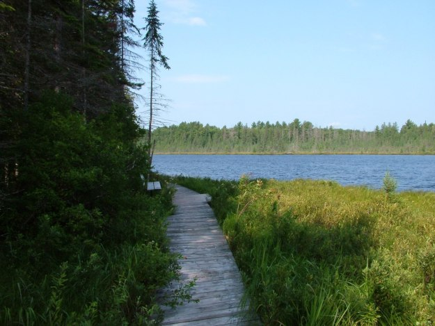 mizzy lake trail - algonquin park - ontario
