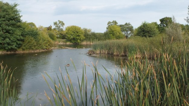 swamp and pond at colonel samuel smith park - etobicoke