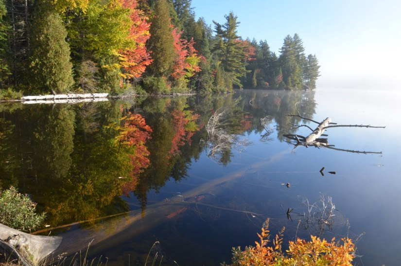 fall colors in algonquin park - fall 2014 - pic 14