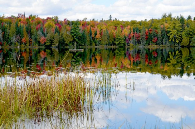fall colors in algonquin park - fall 2014 pic 21