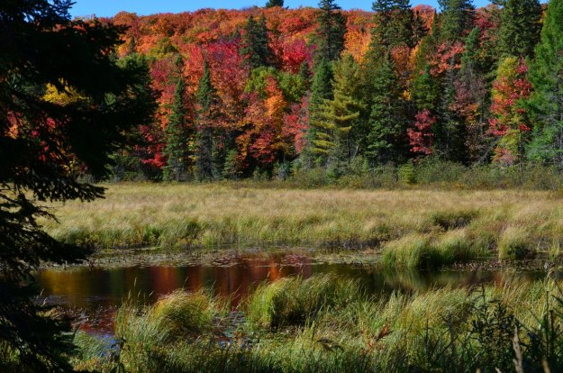 fall colors in algonquin park - fall 2014 pic 25