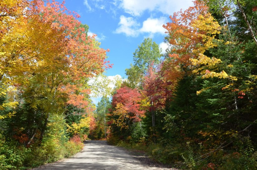 fall colors in algonquin park - fall 2014 - pic 6