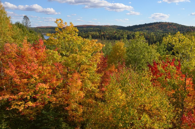 fall colors in algonquin park - visitors centre - fall 2014 pic 3