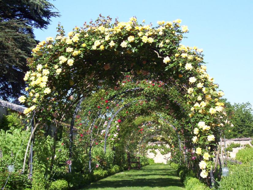 An image of a rose covered arbor at Chateau de la Bourdaisiere in the Loire Valley, France.