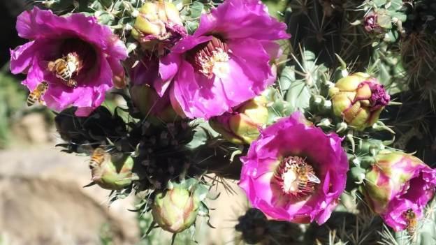 Cactaceae cactus, mesa verde national park, 4