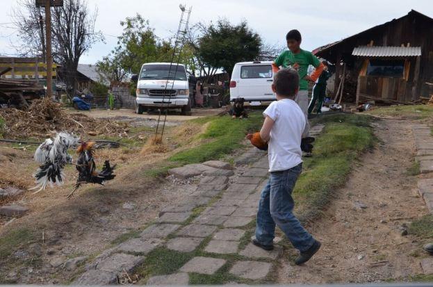 cockfighting near angangueo - mexico 1