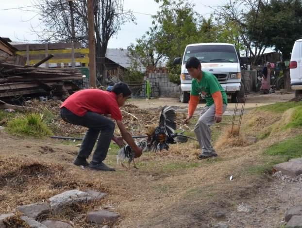 cockfighting near angangueo - mexico 10