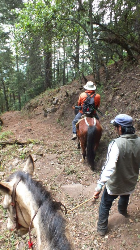 Bob horseback riding to the Cerro Pelon Butterfly Sanctuary, near Macheros, Mexico