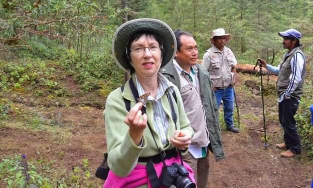 Jean holds a dead Monarch butterfly at Cerro Pelon Monarch Butterfly Sanctuary, near Macheros, Mexico