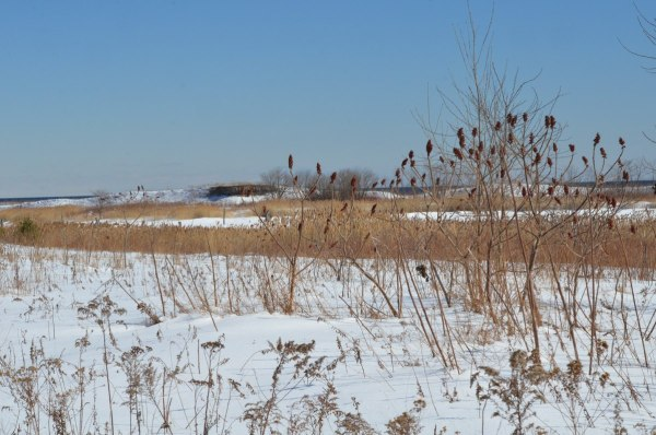 winter at tommy thompson park, toronto, ontario, 2