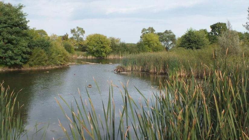 Wetlands at Colonel Samuel Smith Park in Etobicoke, Ontario, Canada