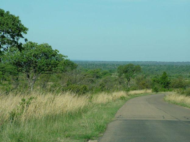 Paved roadway inside Kruger National Park, in South Africa