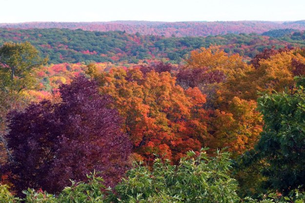 fall colors, dorset tower view, ontario, pic 4