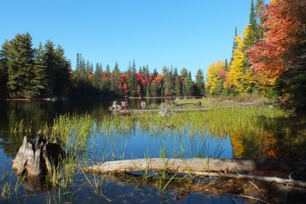 fall colors, tea lake, ontario, pic 1
