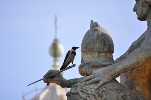 Hooded crow sitting on an outdoor sculpture, Rome, Italy