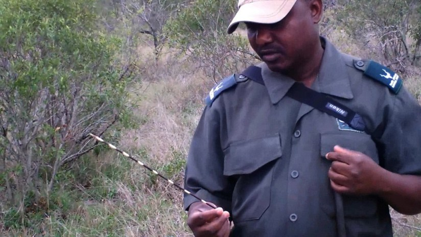 armed safari, kruger national park, south africa, pic 12