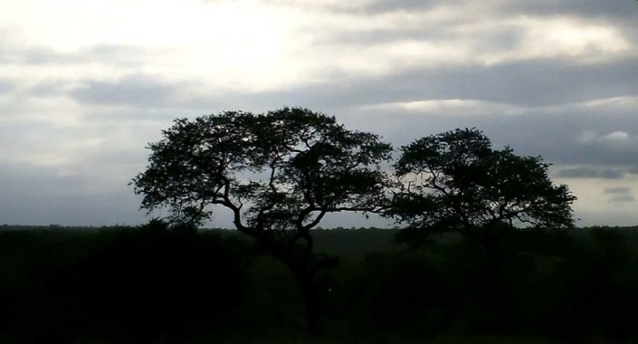 early morning drive, kruger national park, south africa, pic 2