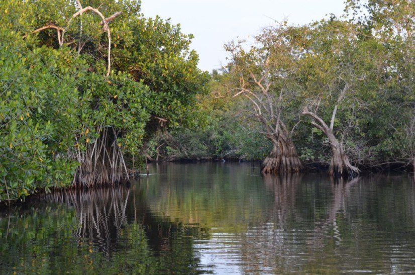 Photo of a channel through the mangrove swamp near San Blas, Mexico