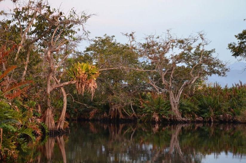 mangrove swamp, san blas, nayarit, mexico, pic 9