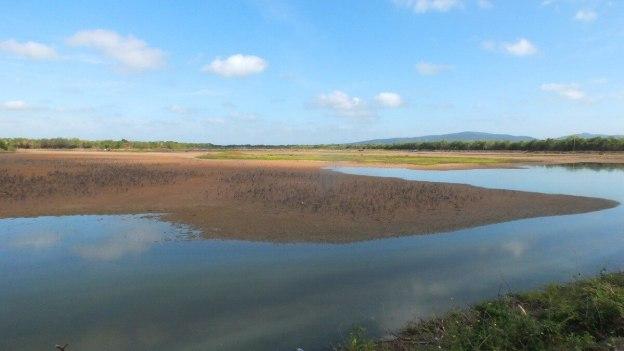 photograph of the shrimp ponds at San Blas, Mexico.