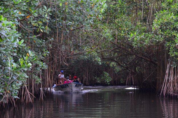 Photo of a tourist boat in the mangrove swamp near San Blas, Mexico
