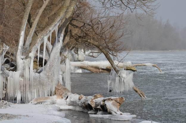 ice coated shoreline and trees, lake ontario, ontario, canada, 36