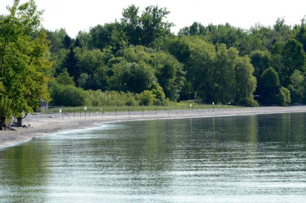 piping plover protected area at darlington provincial park, ontario, 1