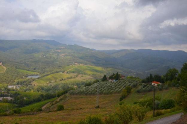 Vineyards and orchards near Il Colombaio di Cencio, Gaiole, Chianti, Tuscany, Italy 2