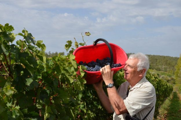 bob hands grapes to grape wagon at il colombaio di cencio vineyard, gaiole in chianti, itay