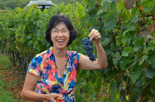 jean holds grapes at il colombaio di cencio vineyard, gaiole in chianti, itay