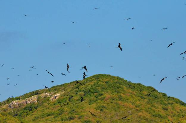 An image of magnificent frigatebirds in flight above Isla Isabel off San Blas, Mexico. Photography by Frame To Frame - Bob and Jean.