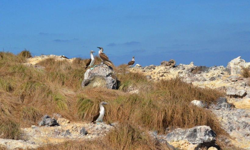 An image of blue-footed booby birds sitting on rocks on Isla Isabel off San Blas, Mexico. Photography by Frame To Frame - Bob and Jean.