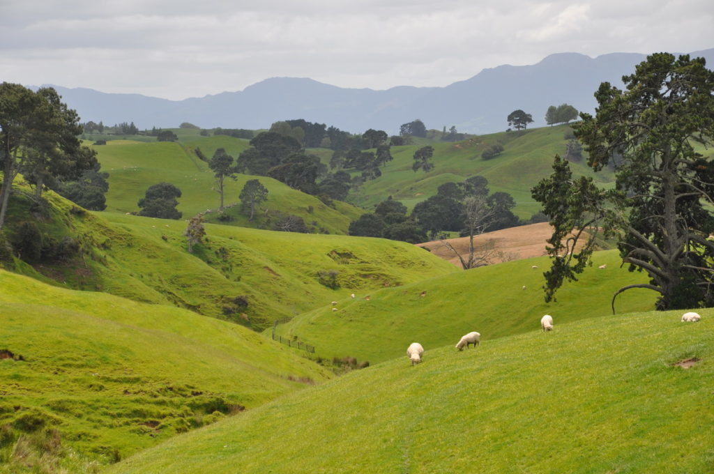 pasturelands-at-hobbiton-movie-set-in-matamata-new-zealand-pic-1