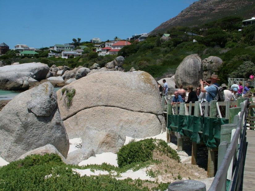 penguin viewing area at boulders beach, table mountain national park, south africa