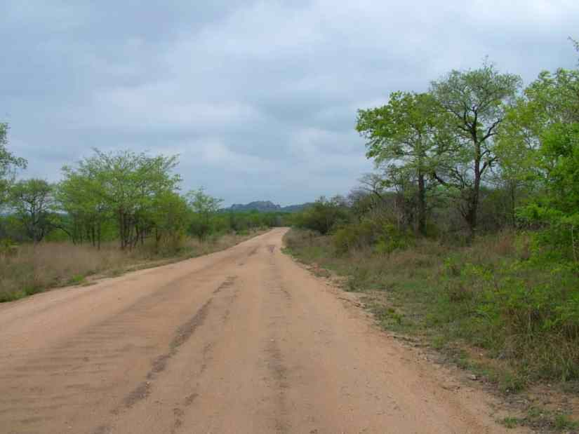 An image of a dirt road in Kruger National Park, South Africa. Photography by Frame To Frame - Bob and Jean.