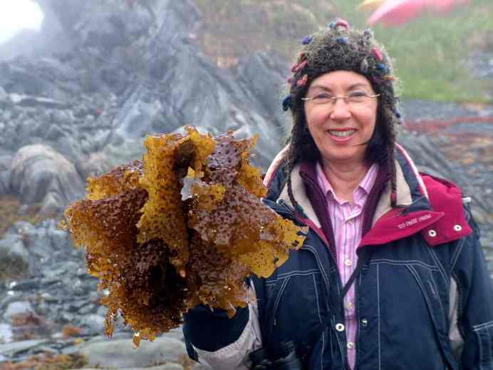 jean with seaweed on quirpon island, newfoundland, canada