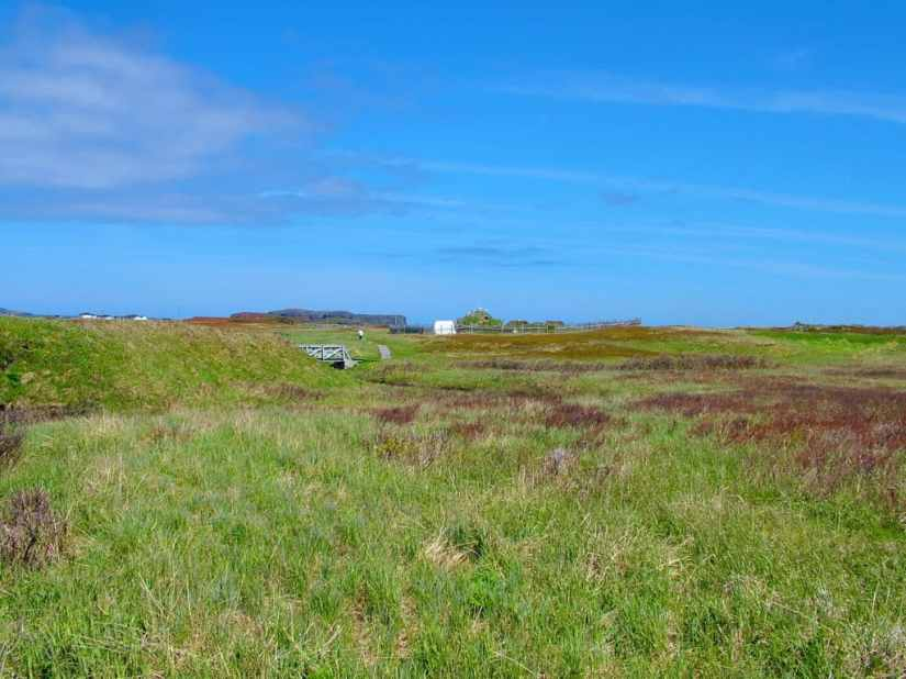 peat bog at l'anse aux meadows unesco world heritage site, newfoundland, Canada
