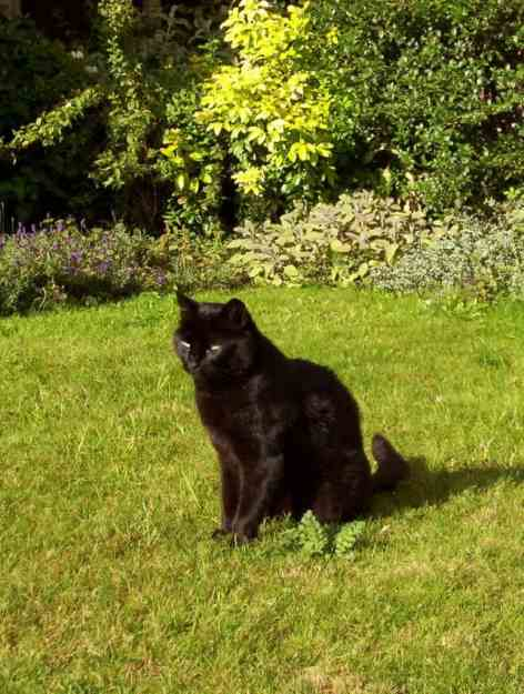 Image of a black cat in the cloister garden at Salisbury Cathedral in England