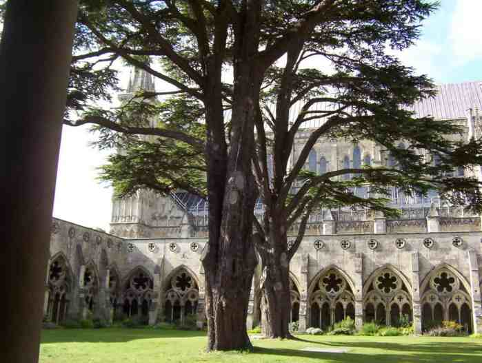 Image of the trees growing inside the cloister garden at Salisbury Cathedral in England.