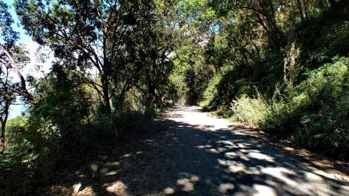 Hillside dirt road in Cerro de San Juan Ecological Reserve, Mexico.